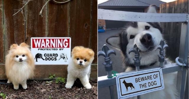 attention-chiens-de-garde-ultra-dangereux-une