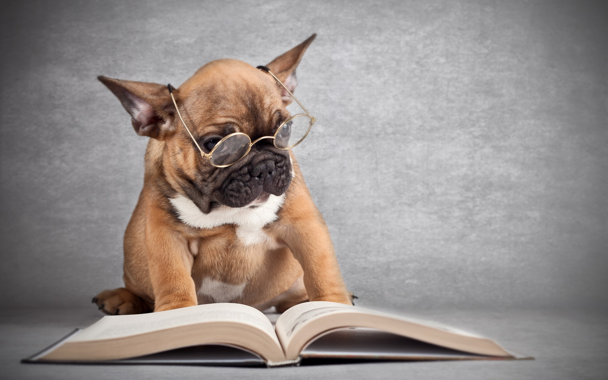 Dog-wearing-glasses-reading-a-book_2560x1600