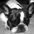 dog-656123_640