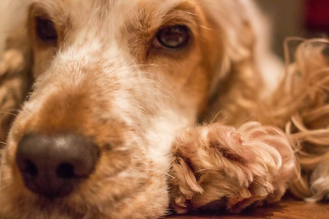 dog-626566_640