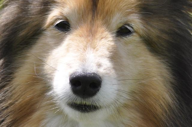 dog-82676_640