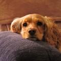 puppy-318161_640