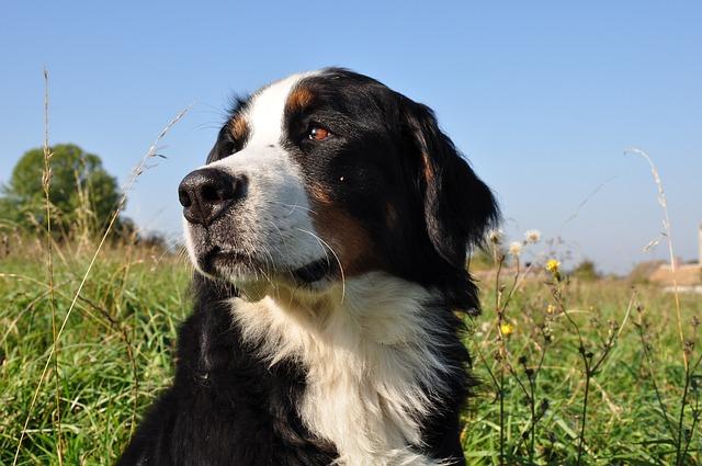 dog-1183475_640