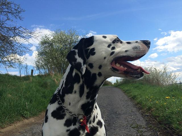 dog-740658_640