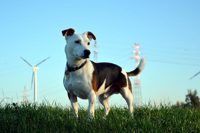 dog-947722_640