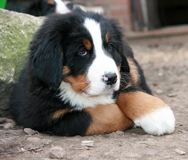puppy-1284673_640