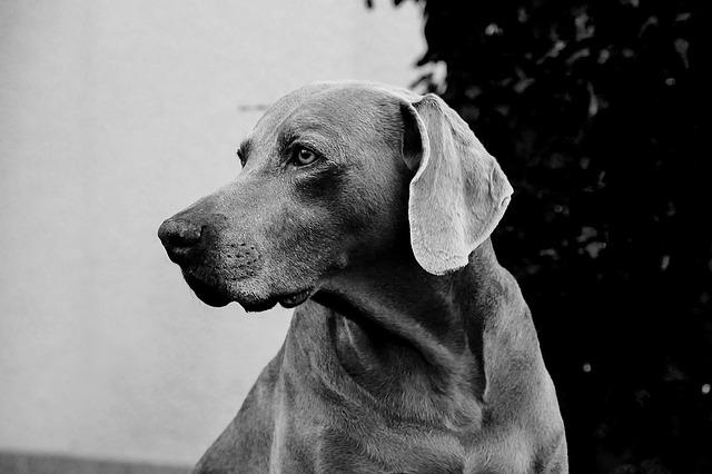 dog-1236064_640