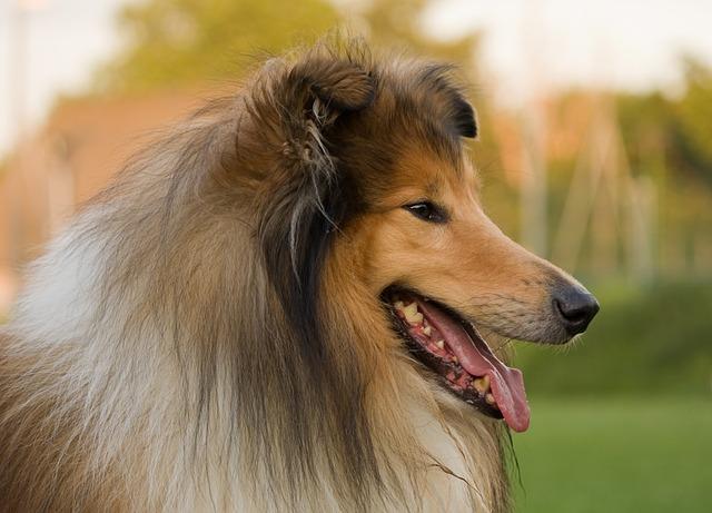 dog-220444_640