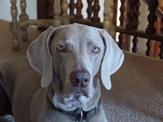 dog-711972_640
