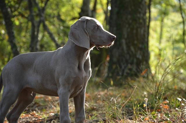 puppy-672229_640