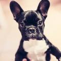 animal-dog-pet-cute
