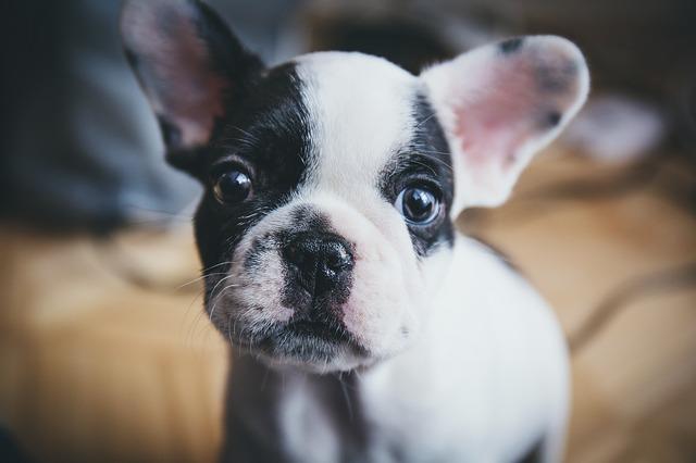 dog-1557287_640