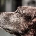 dog-916099_640