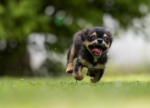 dog-1801419_640