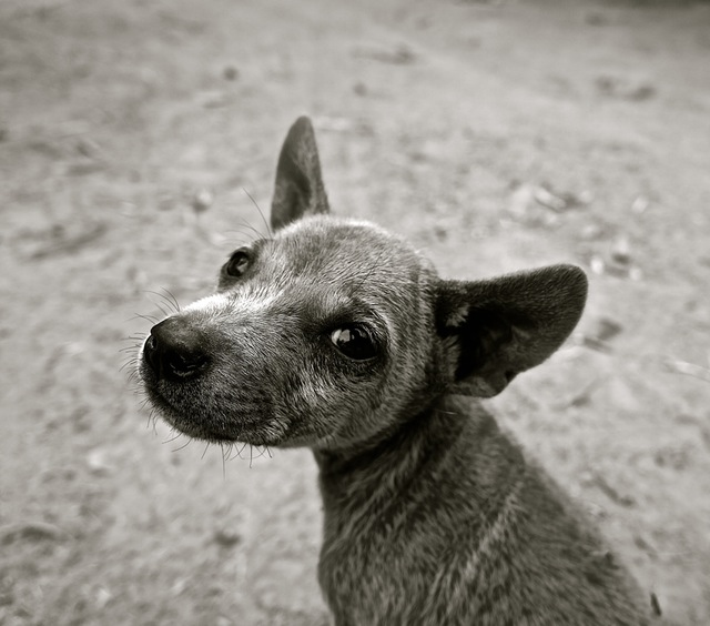 dog-puppy-small-dog-young-dog-39825