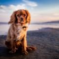 pexels-photo-169606