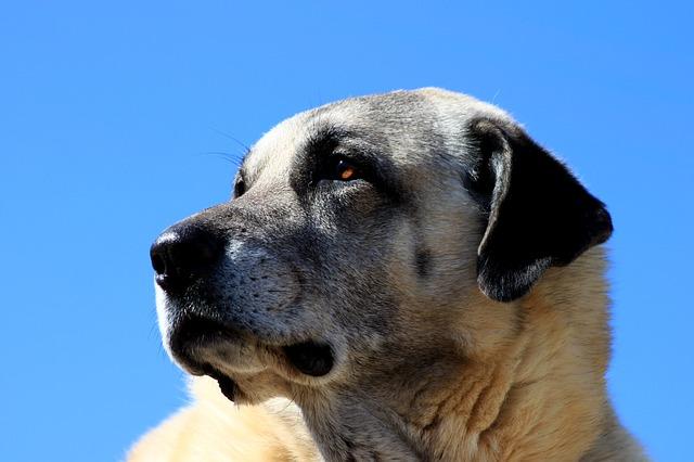 dog-1890120_640