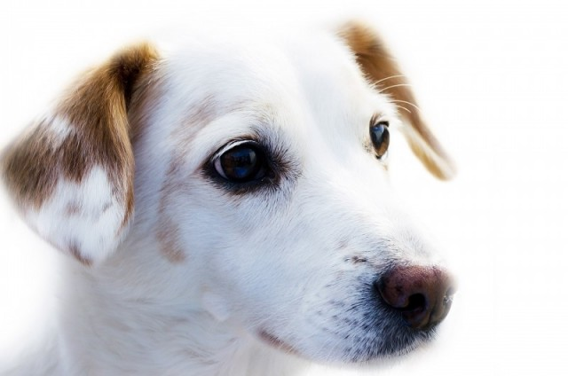 portrait-of-dog-on-white-background